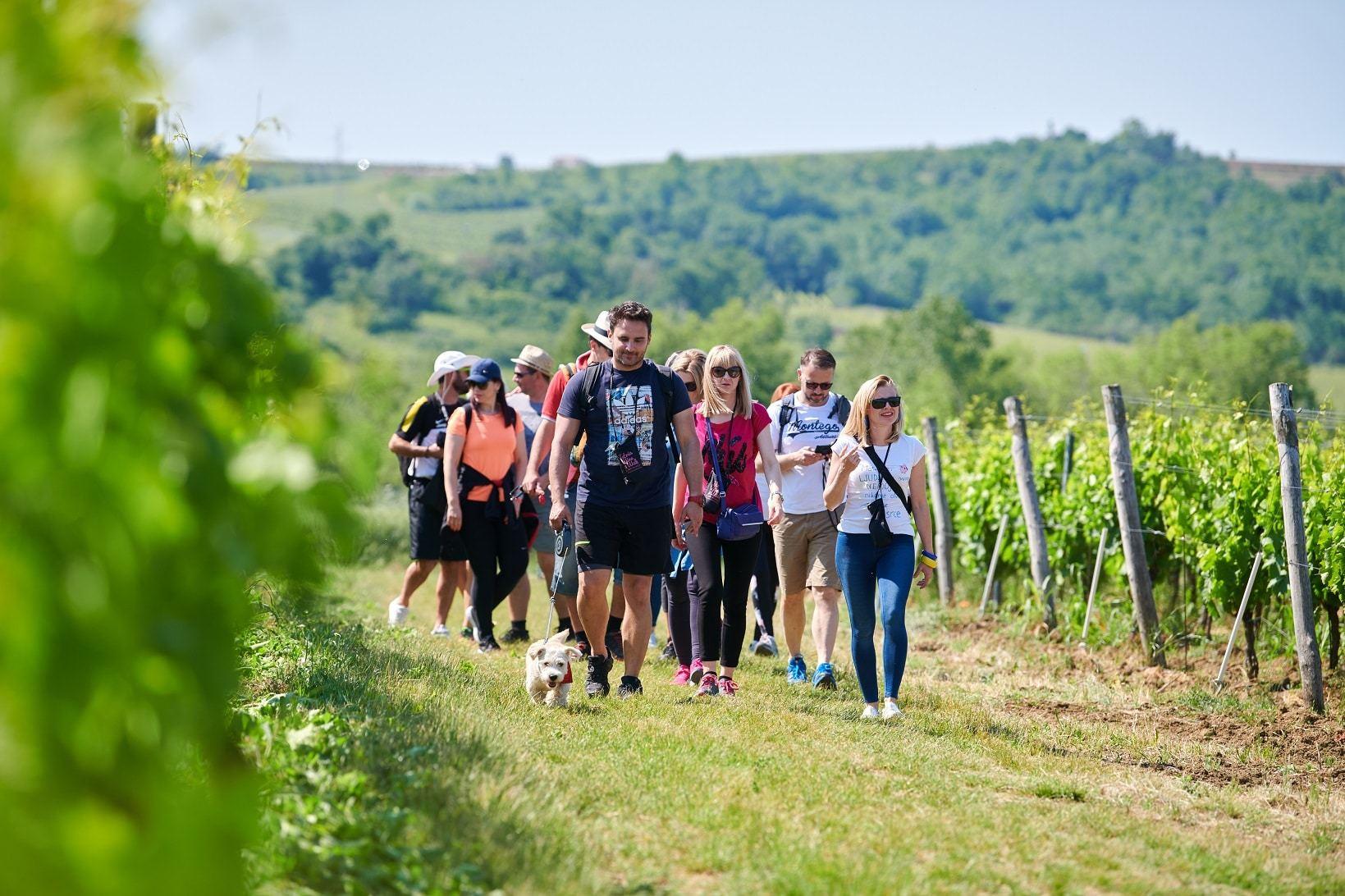 umag_istria_wine_walk